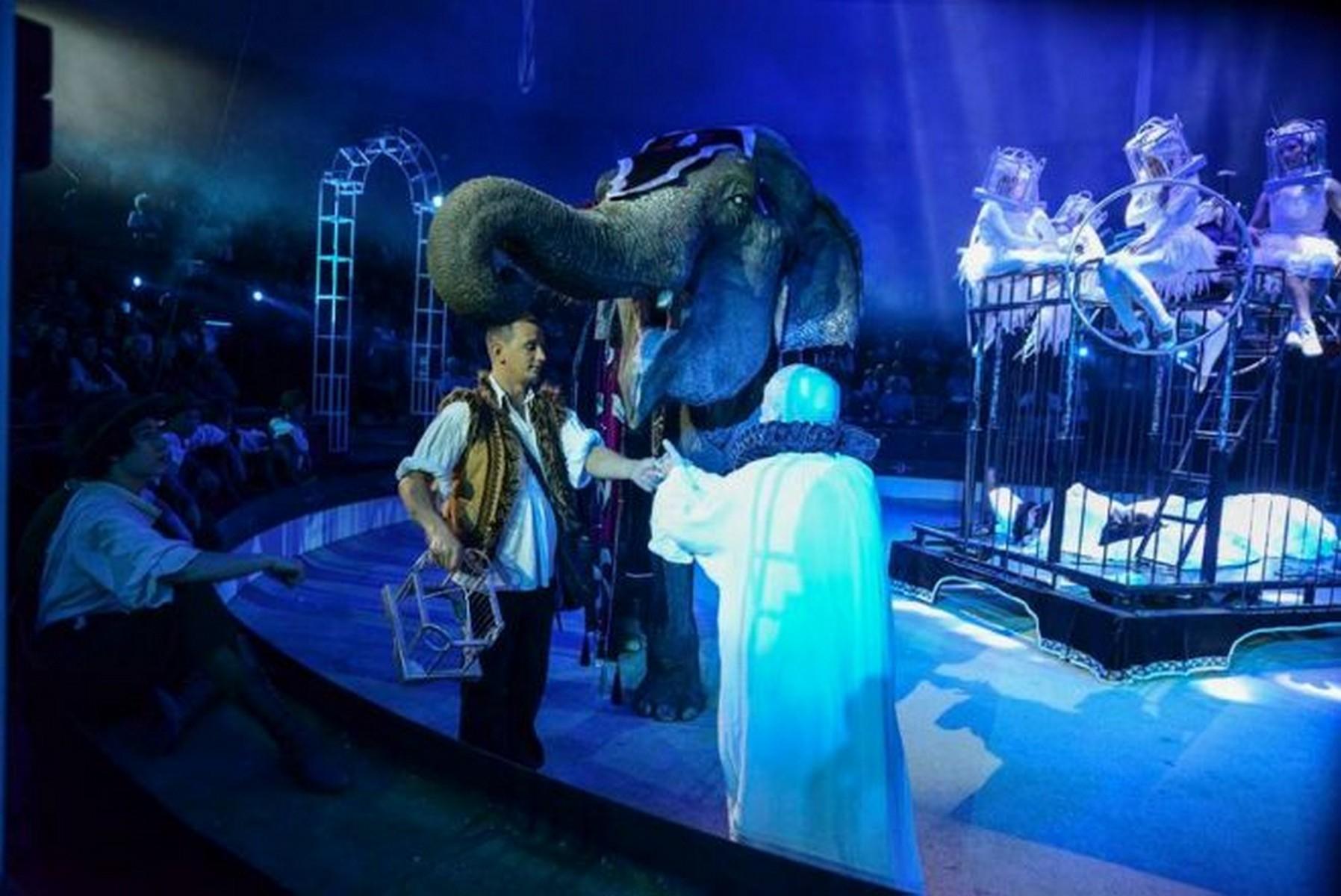 De hogy kerül a Lúdas Matyiba egy elefánt?