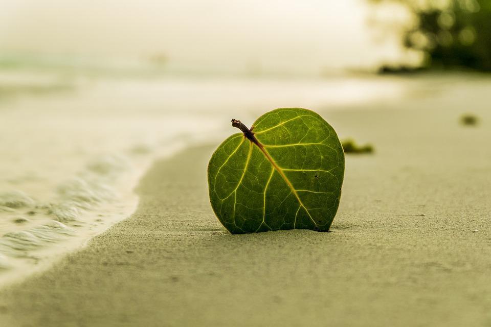 Négykezesek a nyárra – Nagy Zsuka és Lőrincz P. Gabriella verse